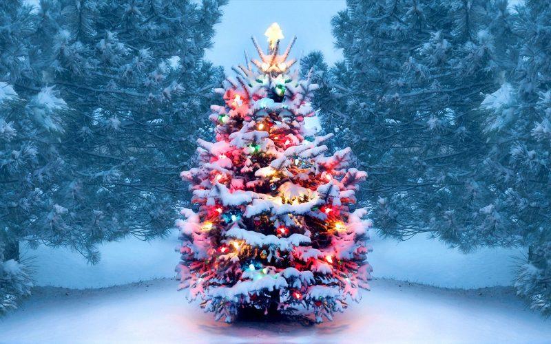 https___www.history.com_.image_MTY4OTA4MzI0ODc4NjkwMDAw_christmas-tree-gettyimages-1072744106